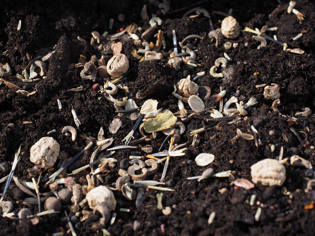 Семена Цветов Семян Посев - Бесплатное фото на Pixabay