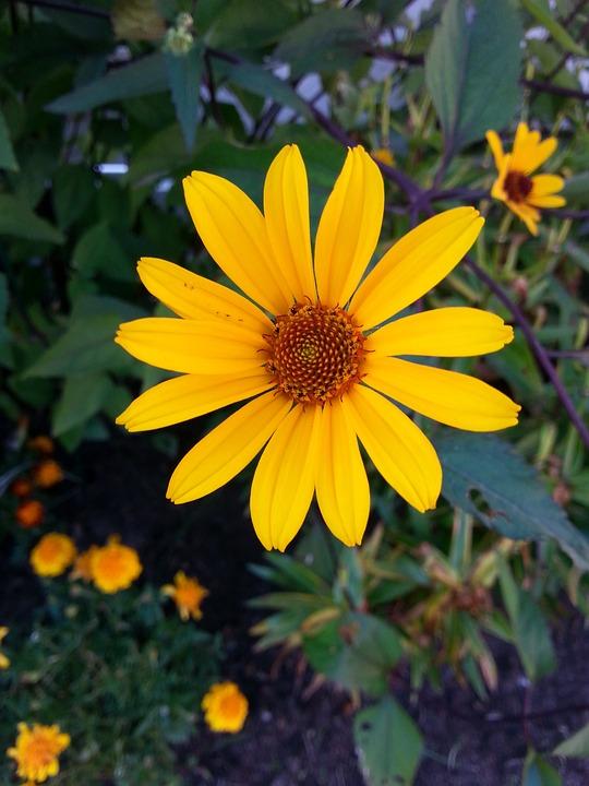Yellow flower summer free photo on pixabay yellow flower yellow flower summer flower summer mightylinksfo