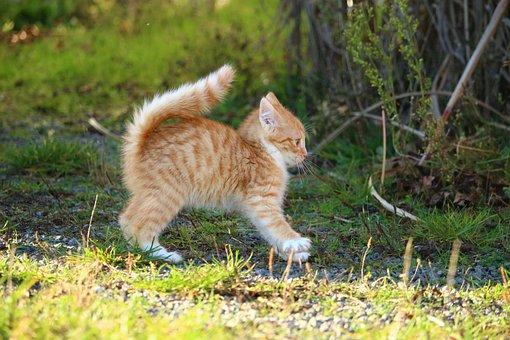 Katze, Kätzchen, Katzenbaby, Katzenjunge