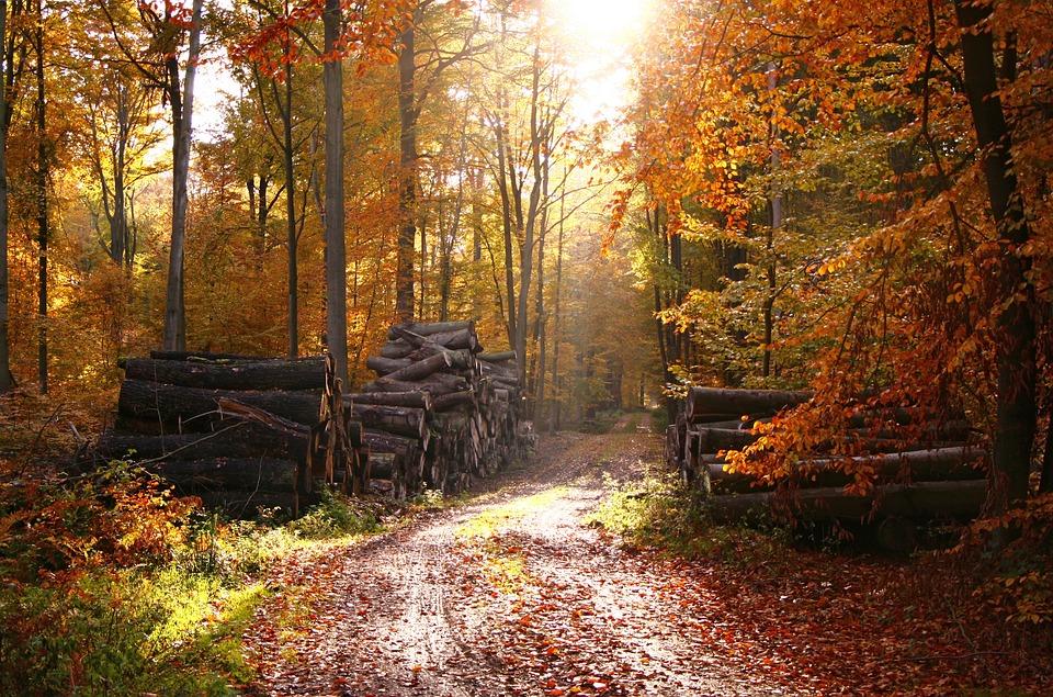 Photo gratuite for t for t de f erie automne image - Photo d automne gratuite ...