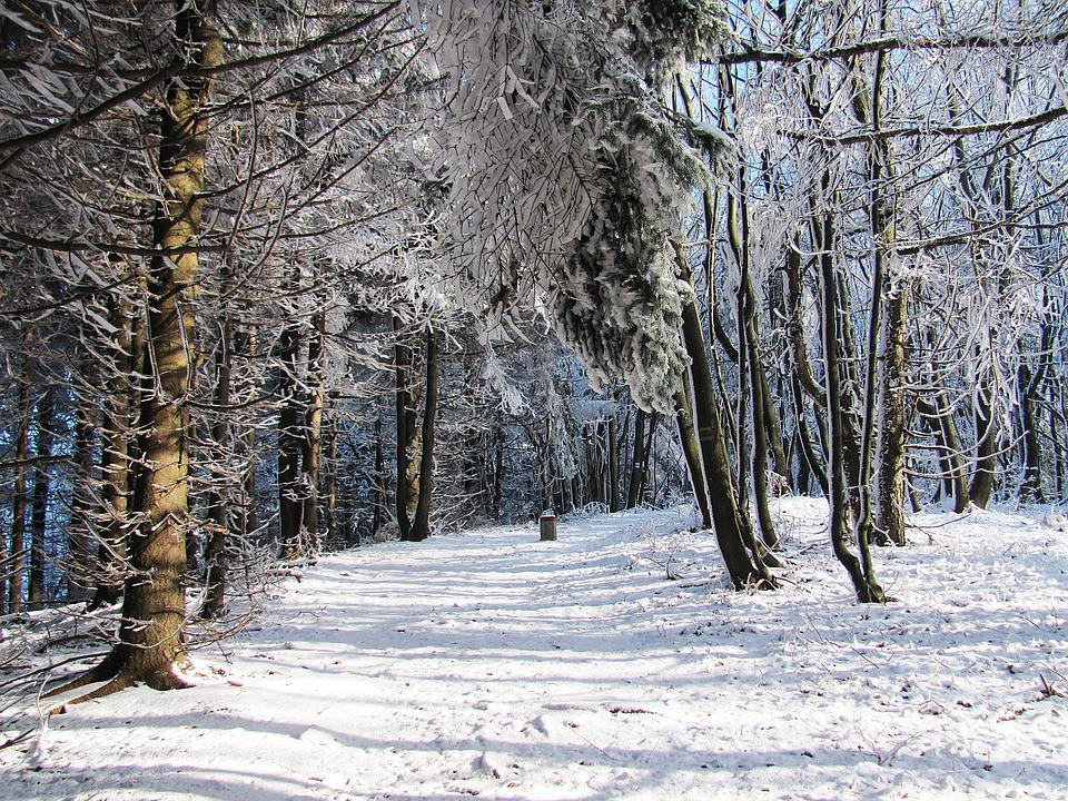 winter forest trees snow - photo #23