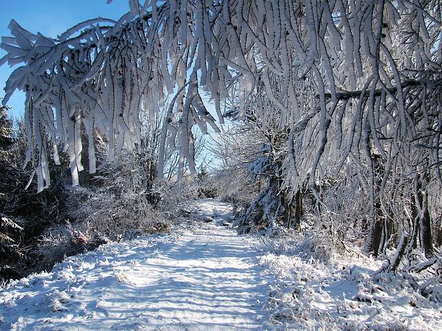 Augen Bäume Herbst Dunkle Nacht Wald Wald Wallpaper: Winter Wald Schnee · Kostenloses Foto Auf Pixabay