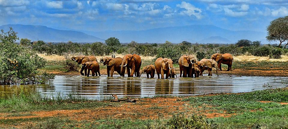Elephant, Watering Hole, Safari, Africa, South Africa