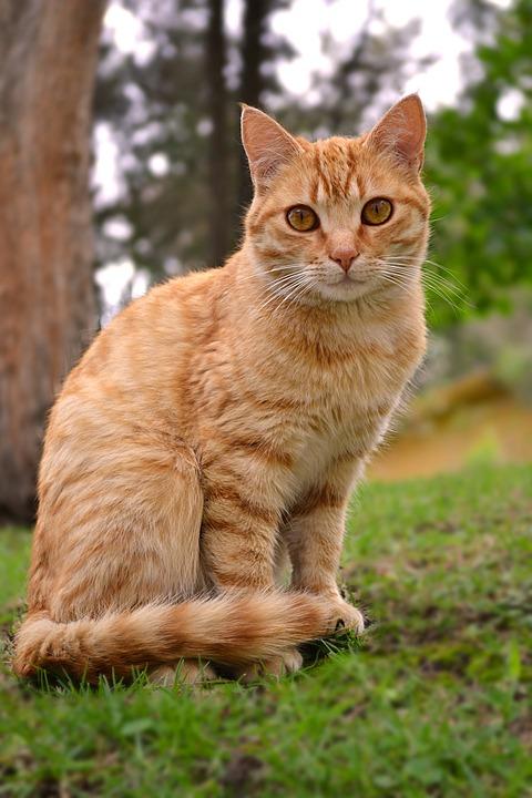 Gato Felino Animal - Foto gratis en Pixabay