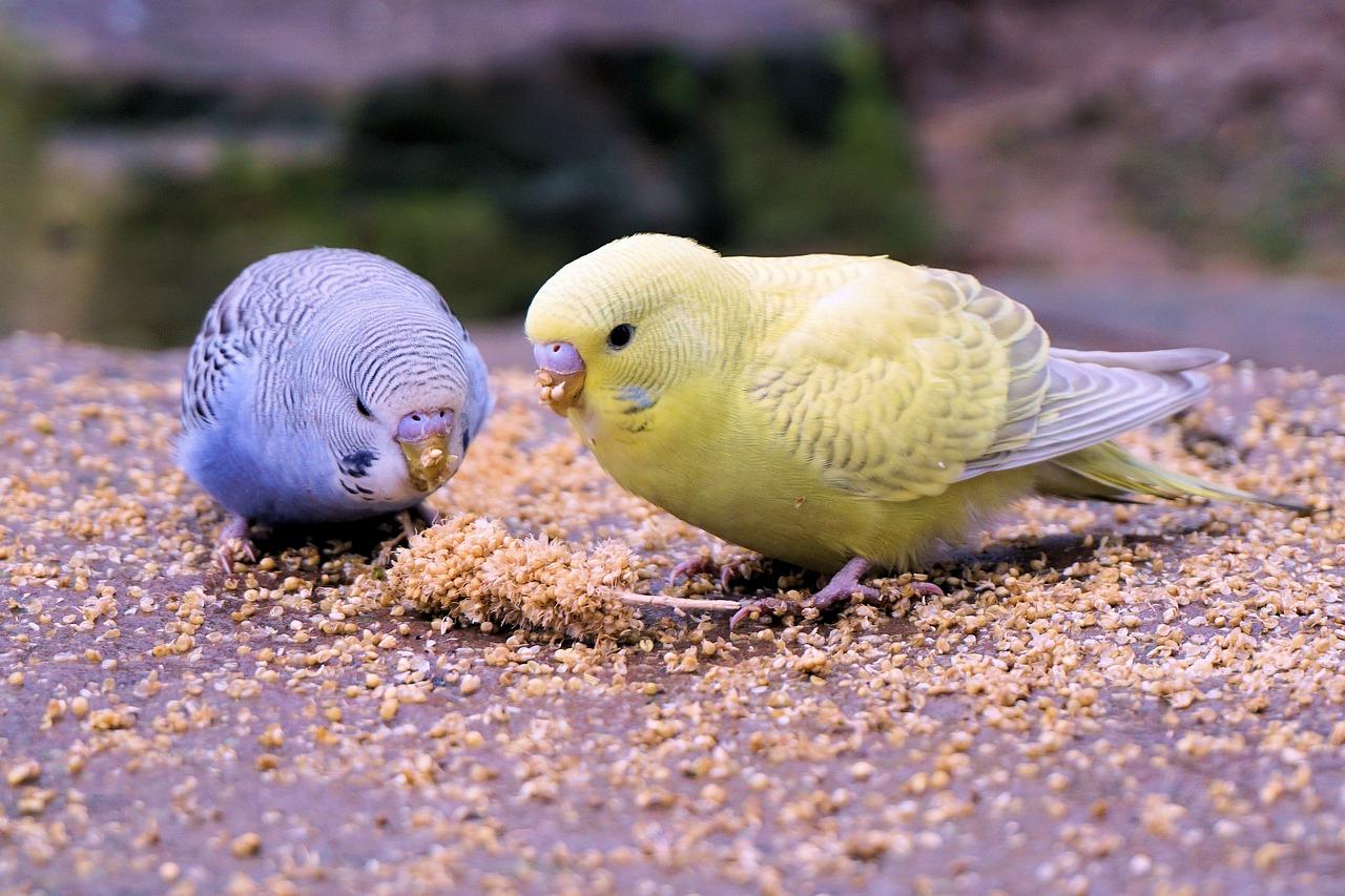 волнистый попугайчик фото было написано