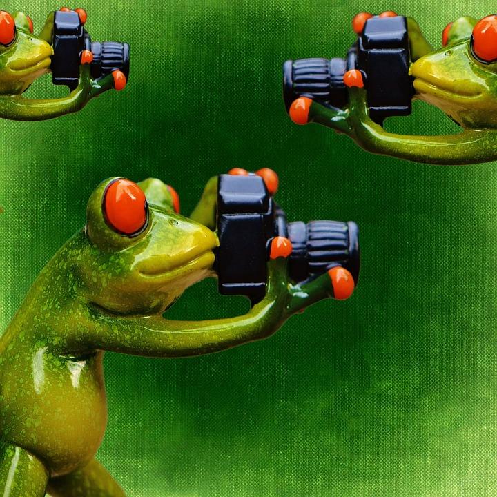 摄影师, 青蛙, 滑稽, 相机, 乐趣, 动物, 照片, 动物世界, 可爱, 数字