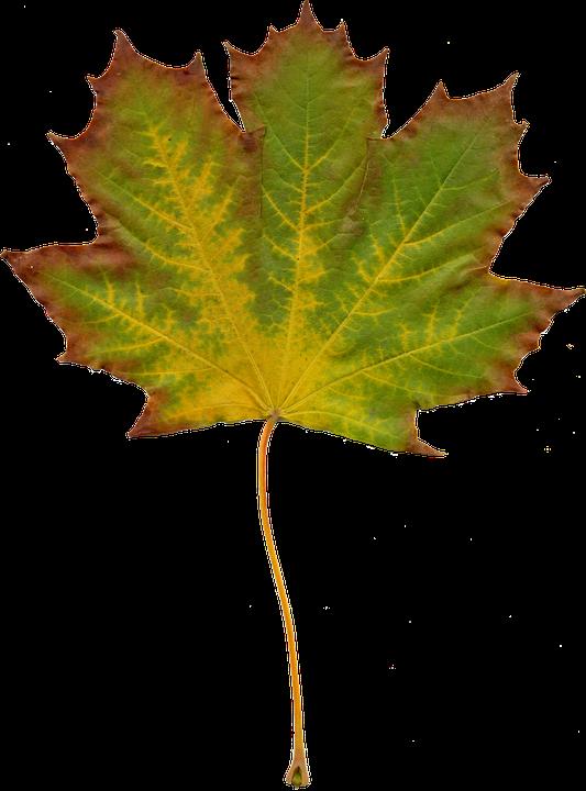 Blätter Natur Herbst Kostenloses Foto Auf Pixabay