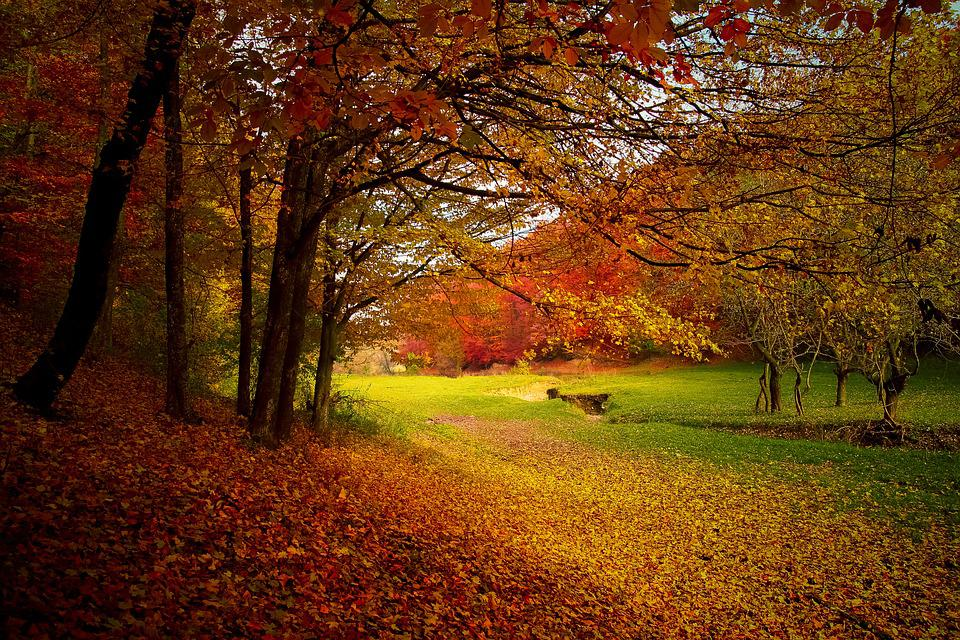 Autumn Forest Woods Nature Fall Landscape Season