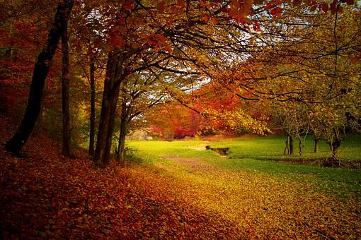 Autumn Landscape Free Pictures On Pixabay