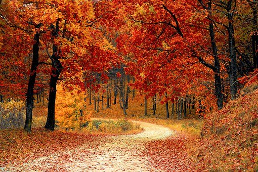 Road, Forest, Fall, Path, Trail, Trees