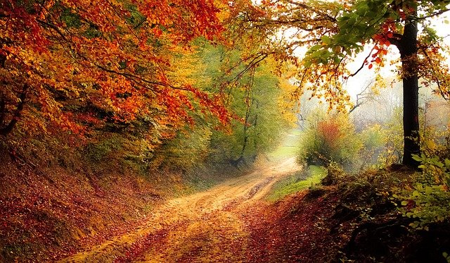 Road Forest <b>Season</b> - Free photo on Pixabay