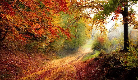 Road, Forest, Season, Autumn, Fall