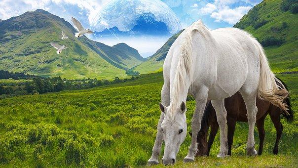 Horse, Stallion, Freedom, Mountain