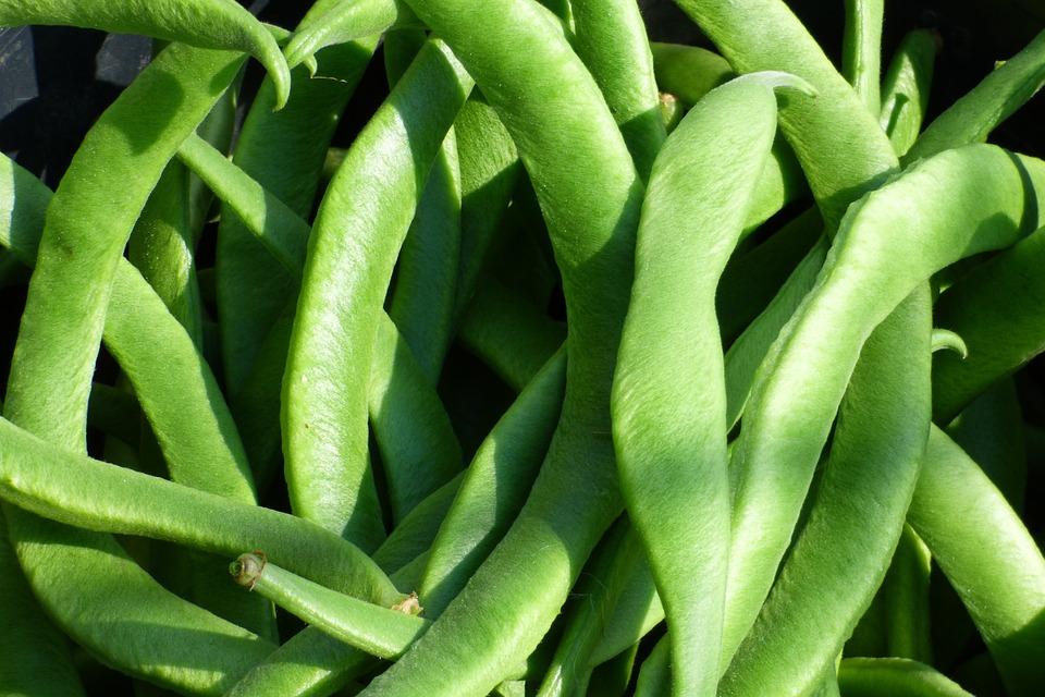 Runner Beans Vegetable - Free photo on Pixabay