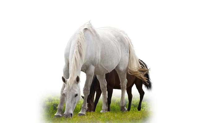 Free Photo Isolated Horse Animal Stallion Free Image