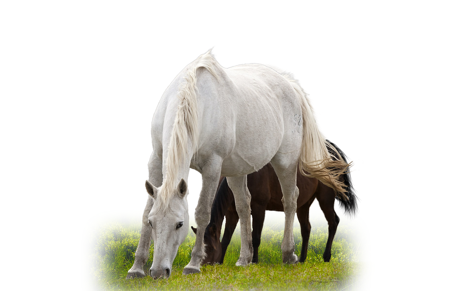 Aislados Caballo Animales · Foto Gratis En Pixabay