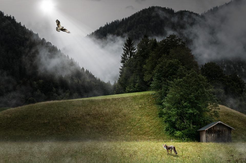 風景, フックス, 自然, 動物, 出会い, 注目, 猛禽