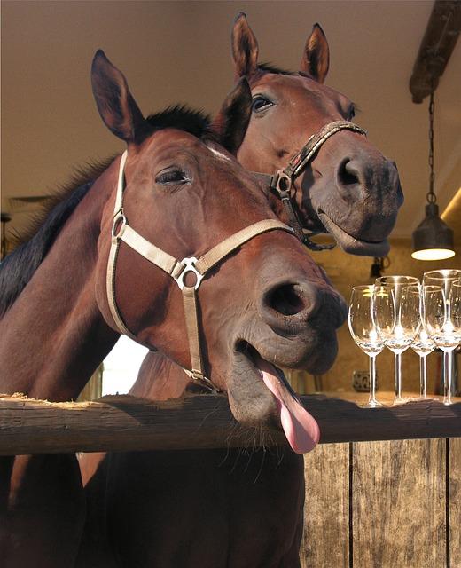 pub horse bar 183 free photo on pixabay