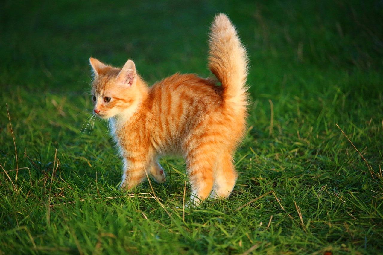 cat body language tail flicking