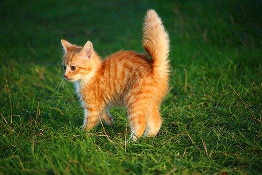 Kucing, Anak Kucing, Kucing Bayi