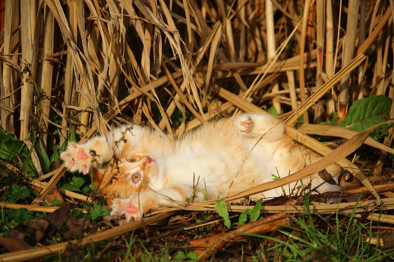 Keeping kittens outside