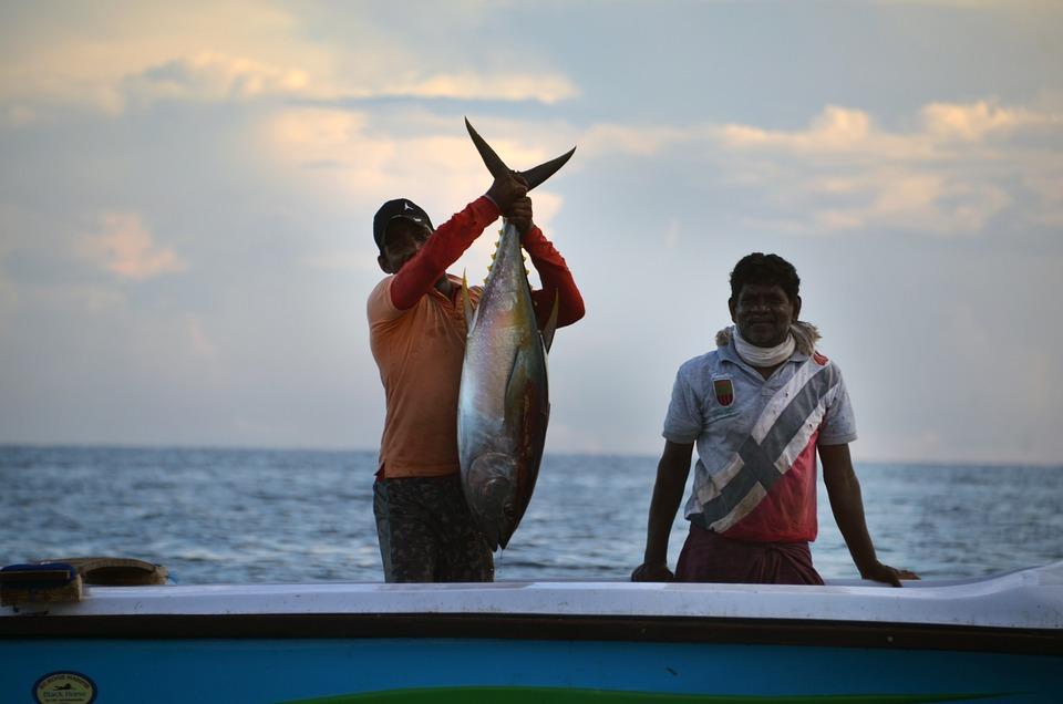 Sri Lanka, Pescatore, Pesca, Barca, Tonno, Di Pesce