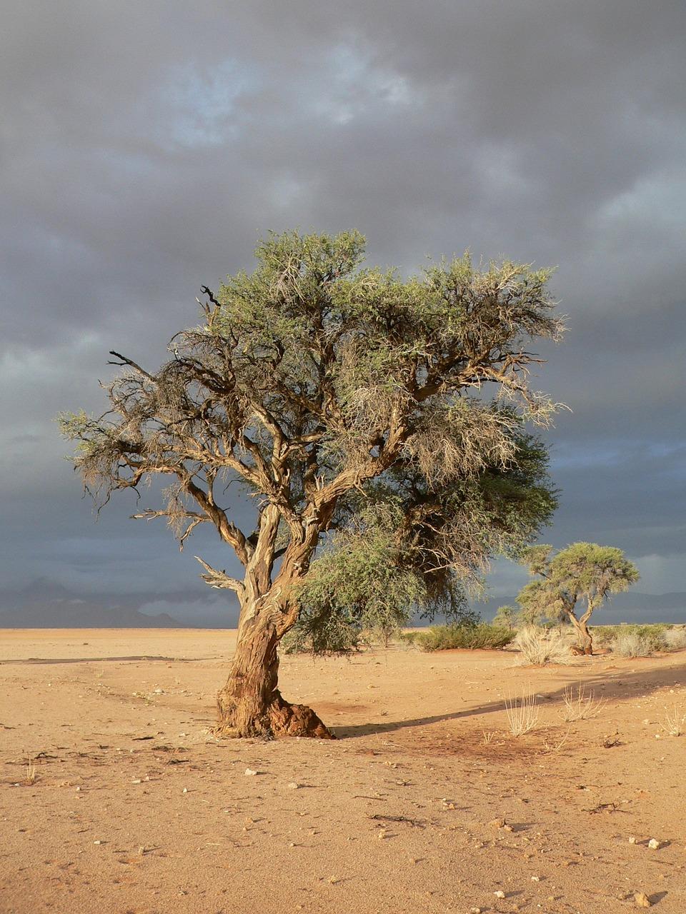Деревья в степи фото и названия