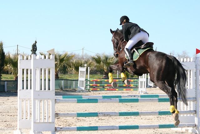 free photo  horse  jumping  black  equestrian - free image on pixabay