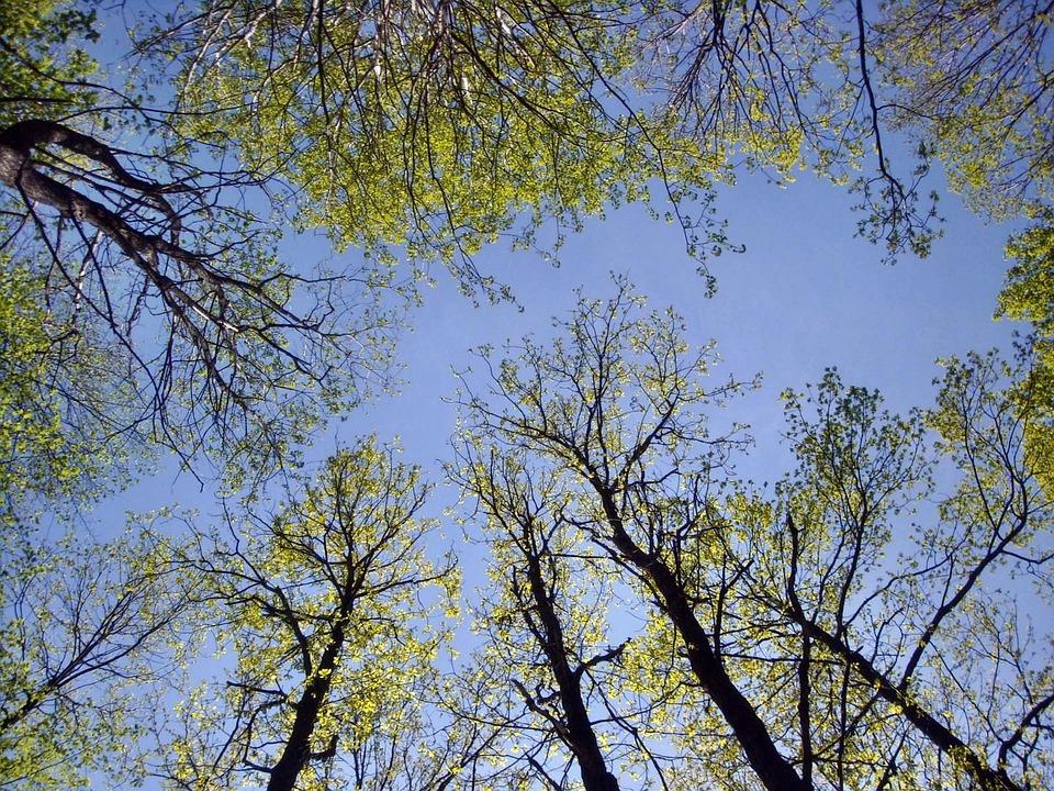 nature arbres ciel fort couronne - Arbre Ciel