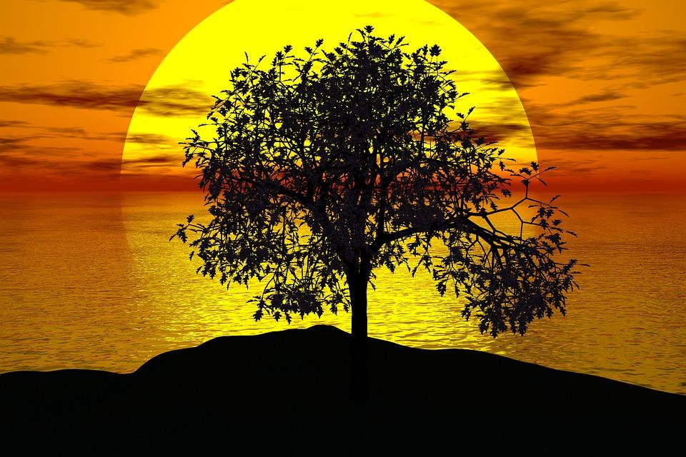 Sun And Tree Free Illustration Tree Sunset Sun Landscape Free