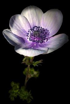 Fleur, Ombre Et Lumière, Nature