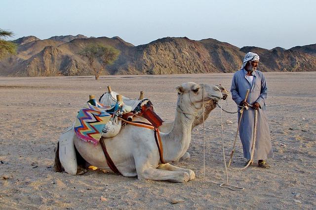 Free Photo Camel Bedouin Desert Sand Egypt Free