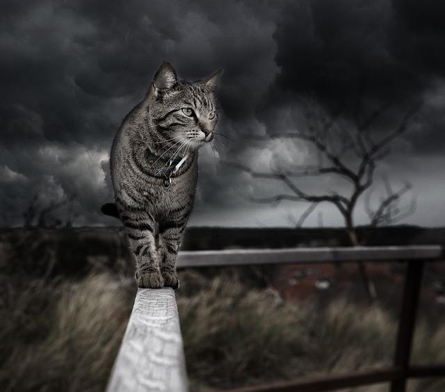 Photo Manipulation Cat Photoshop 183 Free Photo On Pixabay