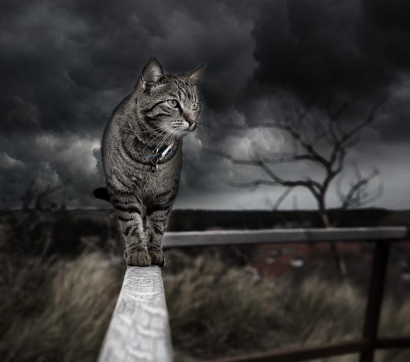写真の操作, 猫, フォトショップ, 処理, ネコ科, 嵐, 雲, 曇りの日, 動物, コラ アート