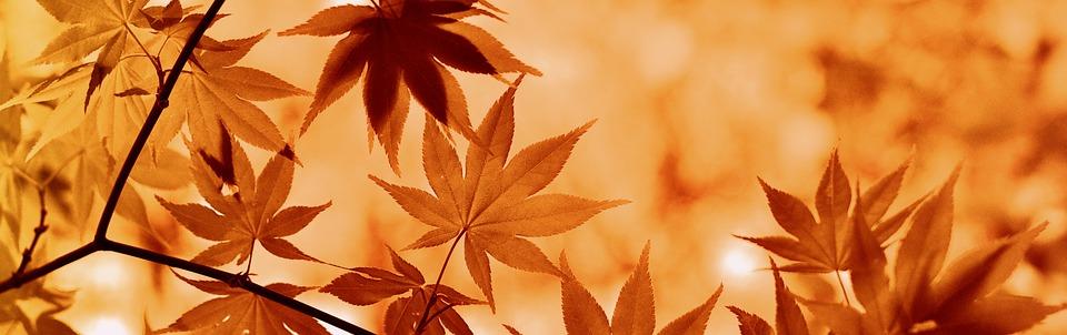 メープル, 秋, ムード, 雰囲気, 茶色, 葉っぱ, 秋の葉, 紅葉, 秋の色, 季節の秋, オレンジの葉