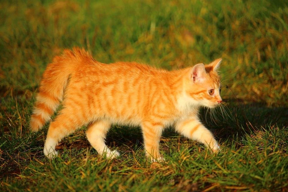 Kotek Kot Baby Czerwony Darmowe Zdjęcie Na Pixabay