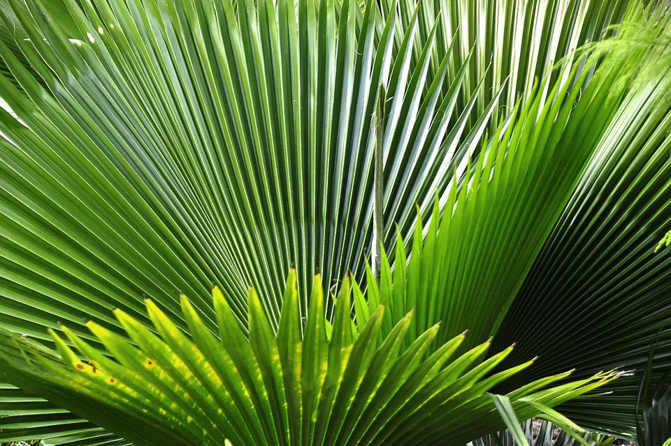 free photo  tropical  plant  nature  tropics - free image on pixabay