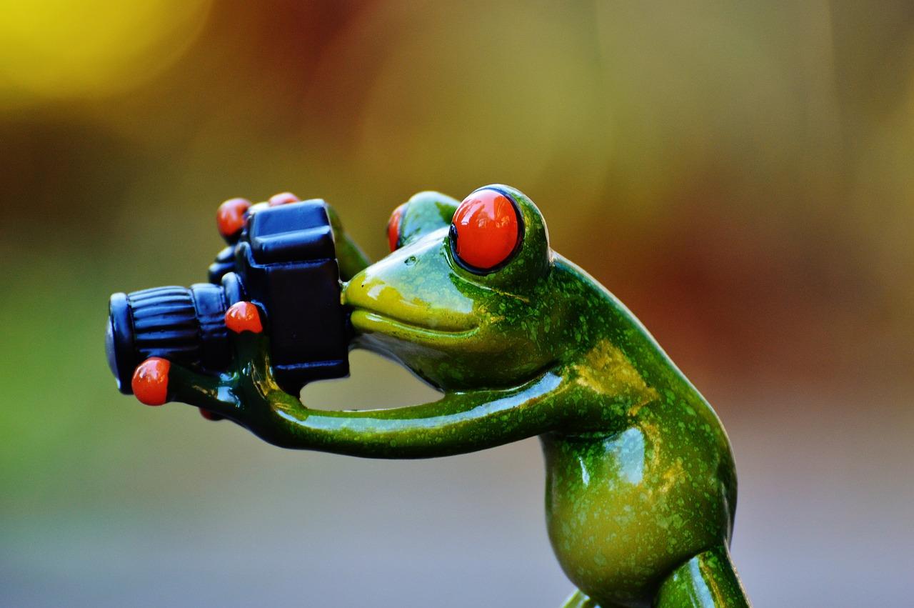 Поздравительные, картинки жаб смешные