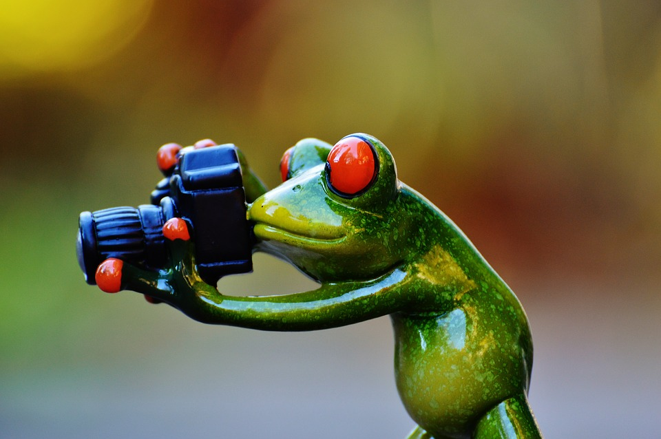 image drole grenouille
