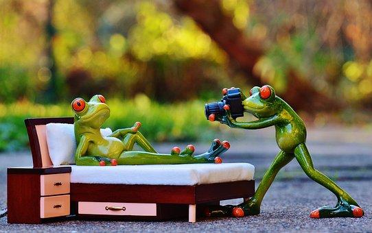 Fotograf, Żaba, Sesji Zdjęciowej