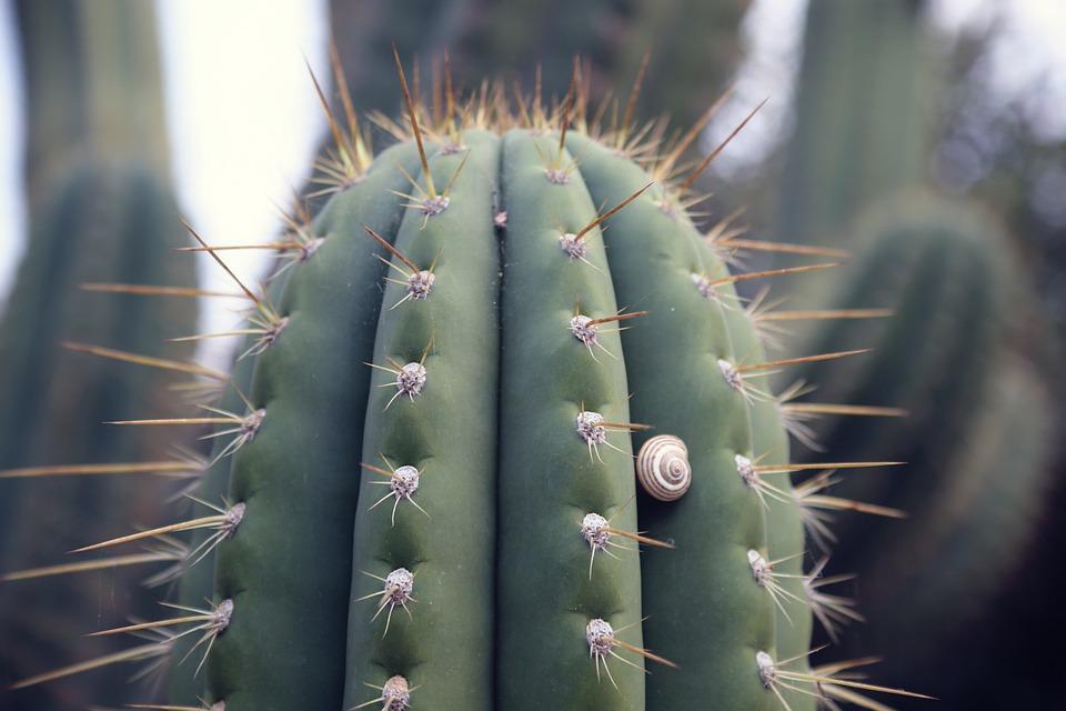 Foto Gratis Cactus Desierto Espinas Planta Imagen