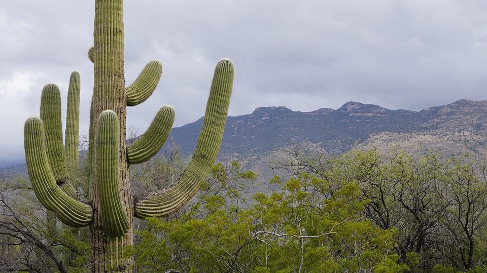 free photo cactus foe so cute tucson free image on pixabay