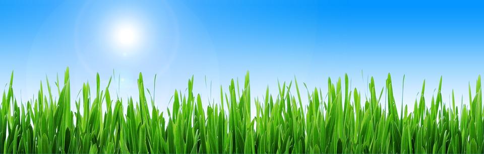 Free illustration: Banner, Header, Meadow, Grass, Sun - Free Image ...