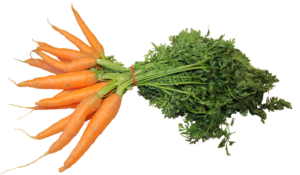 Isolated Federal Carrots 183 Free Photo On Pixabay