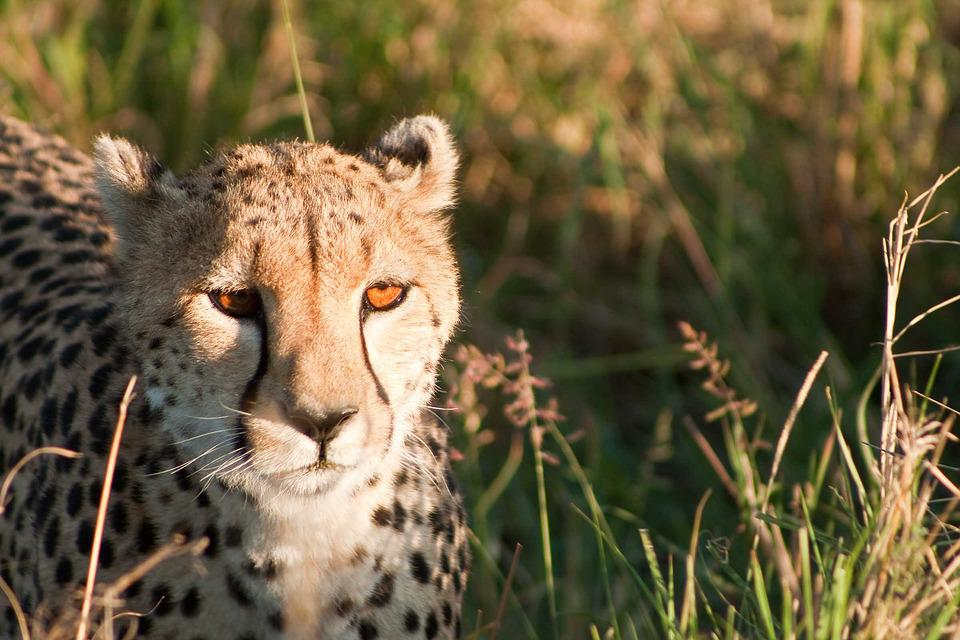 zdarma africká kočička altair jarabo porno
