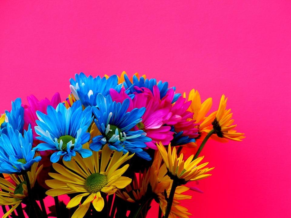 Margaritas Colores · Foto Gratis En Pixabay