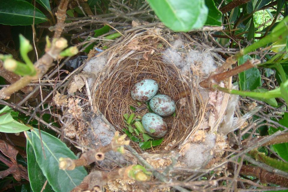 how to make a bird nest for a baby bird