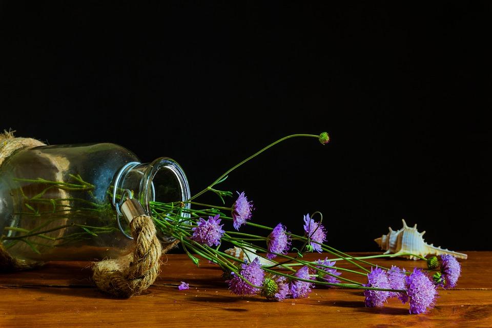 Free photo: Bodegones, Still Life, Light, Color
