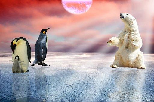 北极熊,鸽子,北极,企鹅,熊,冬天,极性,可爱,v鸽子,冷动物蒸20分钟图片