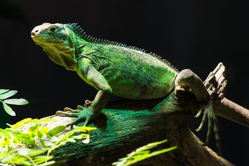 Free exotic animal porn